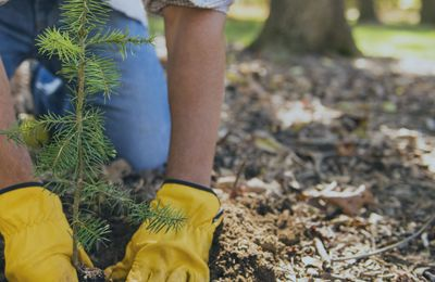 Tree and Shrub Planting, Maintenance, or Removal